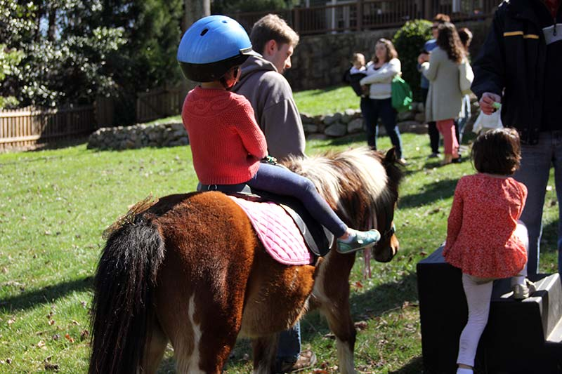 5 year old child riding a pony. she is wearing a blue helmet. another child is getting ready to climb on.